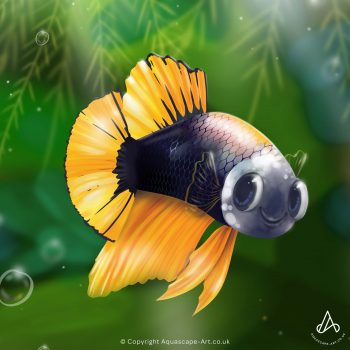 AquascapeArt-Betta-Bruce
